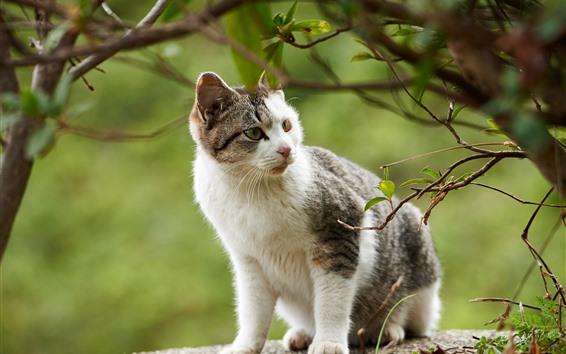 Papéis de Parede Gato bonito olhar lado, árvore, galhos