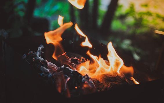 Wallpaper Fire, flame, coal