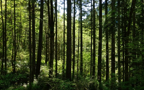 Wallpaper Forest, trees, tree branch, summer