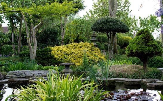 Wallpaper Garden, reeds, trees, pond