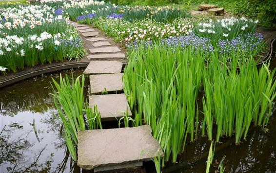 Обои Трава, цветы, вода, камни, парк