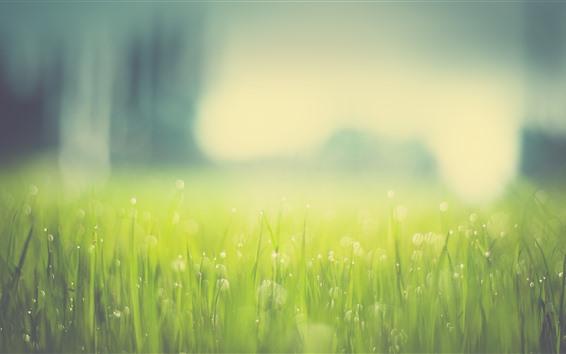 Обои Зеленая трава, легкие круги, туманные, лето