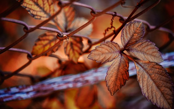 Wallpaper Leaves, wire fence, autumn, hazy