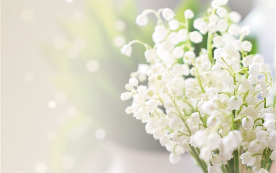 Wallpaper Lilies of the valley, white flowers, hazy