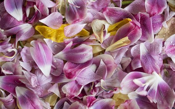 桌布 許多粉紅色花瓣,水滴