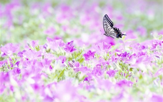 Обои Много розовых цветов, бабочка, насекомое