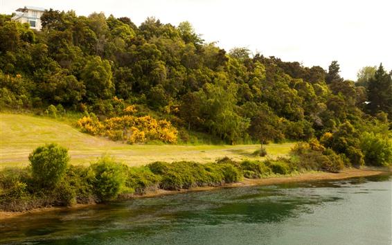 Обои Новая Зеландия, река Вайкато, склон, деревья, зеленый