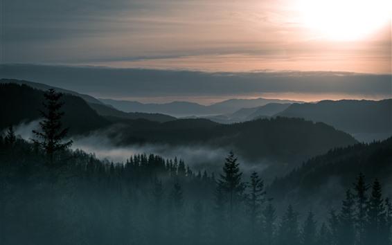 Обои Норвегия, горы, туман, лес, восход солнца, утро