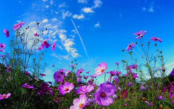 壁紙 ピンクの花、青い空、雲