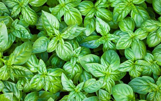Обои Растения, много зеленых листьев