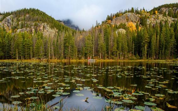 배경 화면 록키 마운틴 국립 공원, 나무, 호수, 안개
