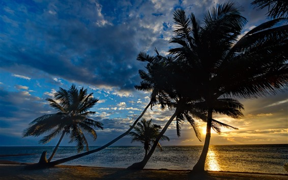 Обои Море, пальмы, силуэт, закат, небо, облака