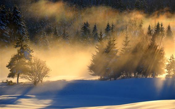 Обои Зима, утро, деревья, снег, солнечные лучи, туман
