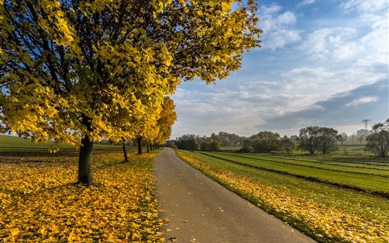 Обои Осень, деревья, желтые кленовые листья, дорога, поля