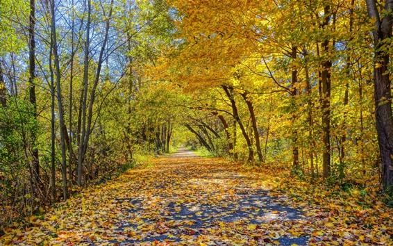 桌布 美麗的秋天,路,樹,黃色葉子