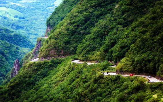 桌布 巴西,山,道路