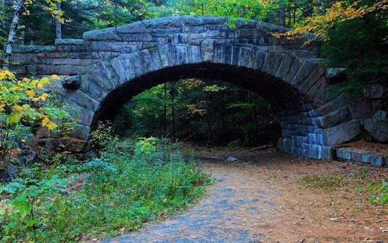 Fondos de pantalla Puente, árboles, camino, otoño