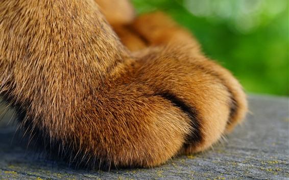 壁紙 猫の足のマクロ写真、足