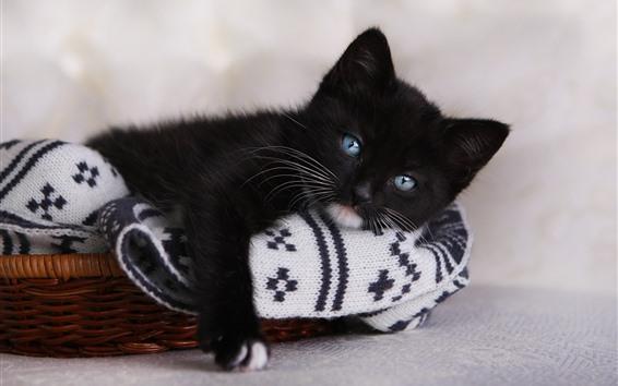 Papéis de Parede Gatinho preto fofo, olhos azuis, olhe, descanse