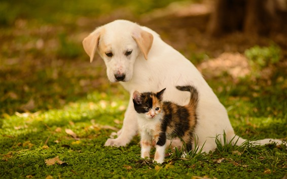 Обои Собака и котенок, друзья, трава