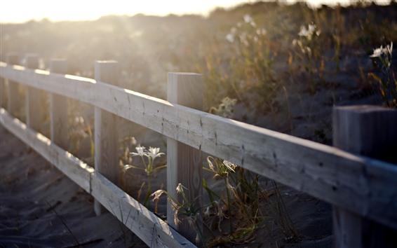 Обои Забор, цветы, солнечные лучи, туманные