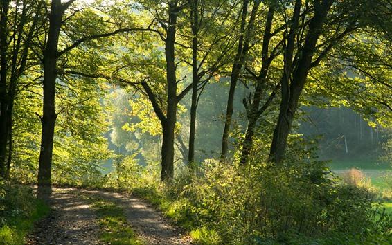 Wallpaper Germany, Bayern, trees, sunshine, nature scenery