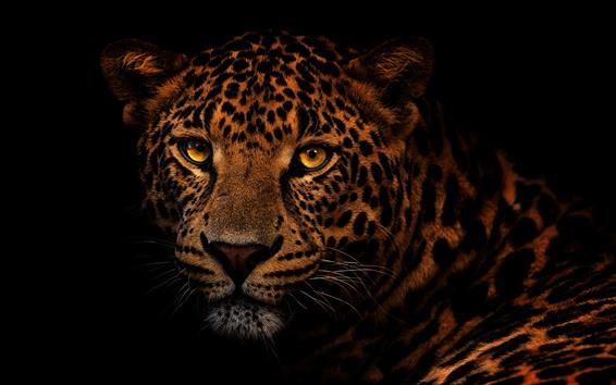 Обои Леопард, лицо, глаза, взгляд, черный фон