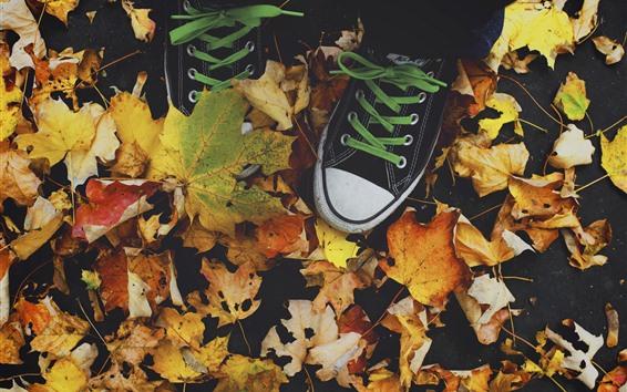 Обои Клен листья, обувь, осень