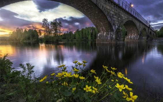 Fond d'écran Norvège, pont, rivière, arbres, fleurs jaunes, lumières, crépuscule