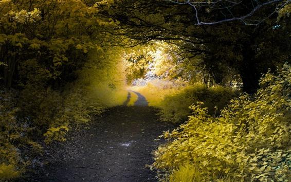 桌布 道路,樹木,葉子,道路,自然