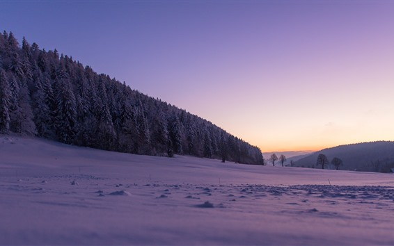 Hintergrundbilder Schweiz, Schnee, Winter, Bäume, Wald, lila