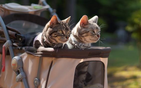 Обои Две кошки, коляска