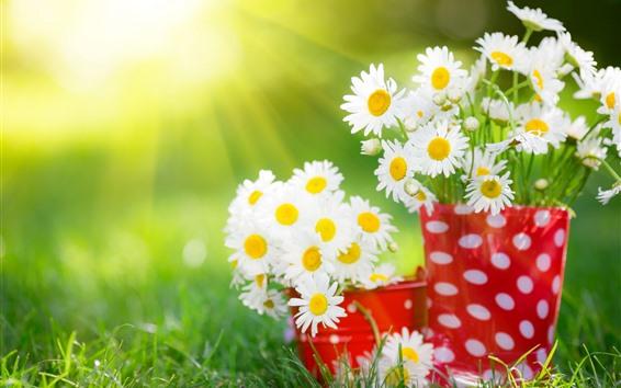 Обои Белые цветы ромашки, красная чашка, солнечный свет