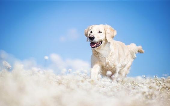 Fondos de pantalla Perro blanco corriendo, flores, nebuloso, cielo azul