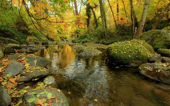 배경 화면 가을, 숲, 나무, 돌, 이끼, 크릭, 물