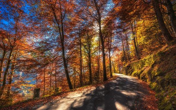 Wallpaper Autumn, trees, road, sunshine, yellow leaves
