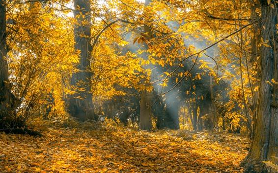 Wallpaper Autumn, trees, yellow leaves, sun rays
