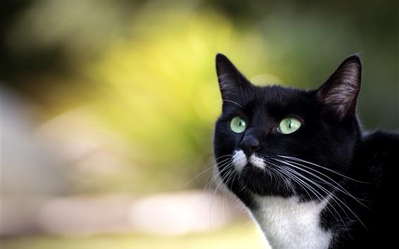 壁紙 黒い猫、顔、緑色の目、見て、角な背景