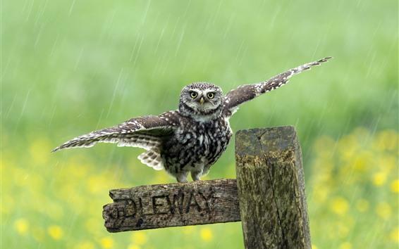 Wallpaper Cute little owl, wings, wood, rainy