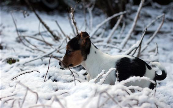桌布 可愛的小狗,冬天,雪