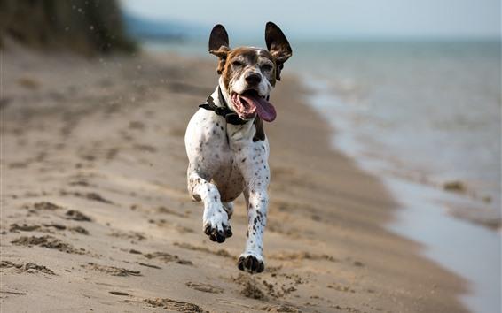 桌布 狗跑,海灘,海