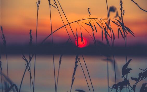 배경 화면 잔디, 스파이크, 호수, 실루엣, 일몰