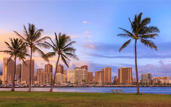 Wallpaper Hawaii, palm trees, skyscrapers, city, bay, dusk