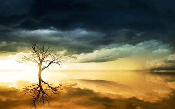 Обои Одинокое дерево, небо, озеро, отражение воды, облака, закат