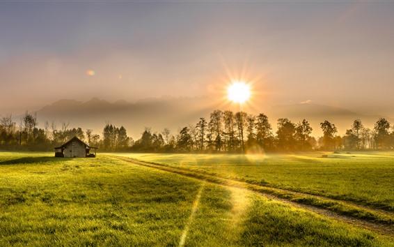 Обои Утро, поле, деревья, дом, зеленый, солнечный свет