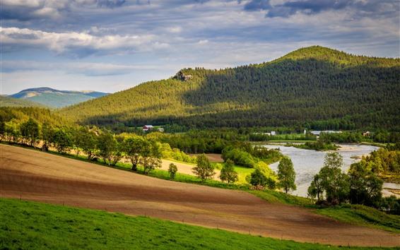 桌布 挪威,多夫爾,樹木,山脈,草地,房子