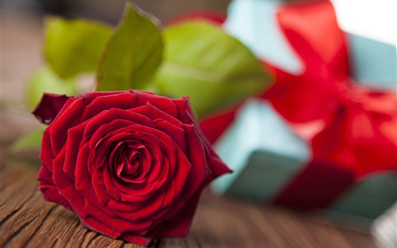 Wallpaper One red rose, petals, gift, romantic