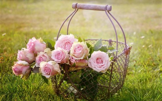 Wallpaper Pink roses, flowers, basket, grass
