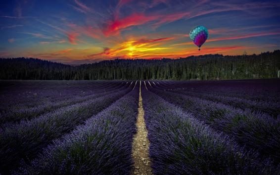 桌布 紫色薰衣草花田,熱空氣氣球,樹,日落