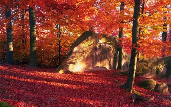 Hintergrundbilder Rote Blätter, Bäume, Stein, Herbst